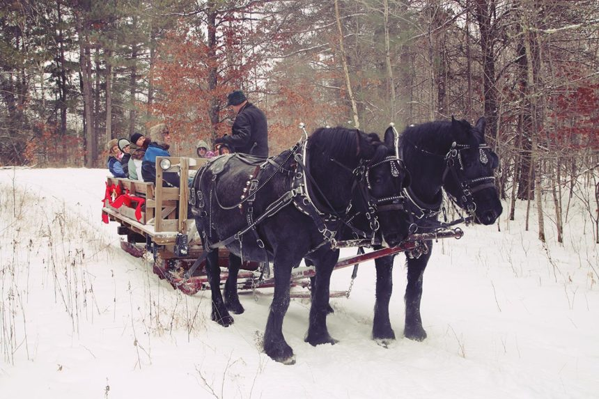 Sleighride in Pinewood MN